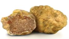 Witte truffel - Tuber Magnatum Pico Vittadini
