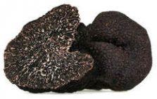 Zwarte wintertruffel - Tuber Melanosporum Vittadini